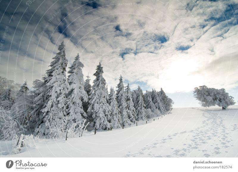 oder so ?? Himmel Natur weiß Baum Ferien & Urlaub & Reisen Sonne Winter Einsamkeit Wolken Wald Ferne Erholung Landschaft kalt Schnee Berge u. Gebirge