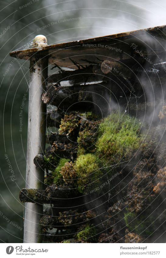 Kleine Moos-Saline Natur Wasser grün Erholung Herbst Holz braun Metall nah natürlich Rauch Verfall Wasserdampf rauchend
