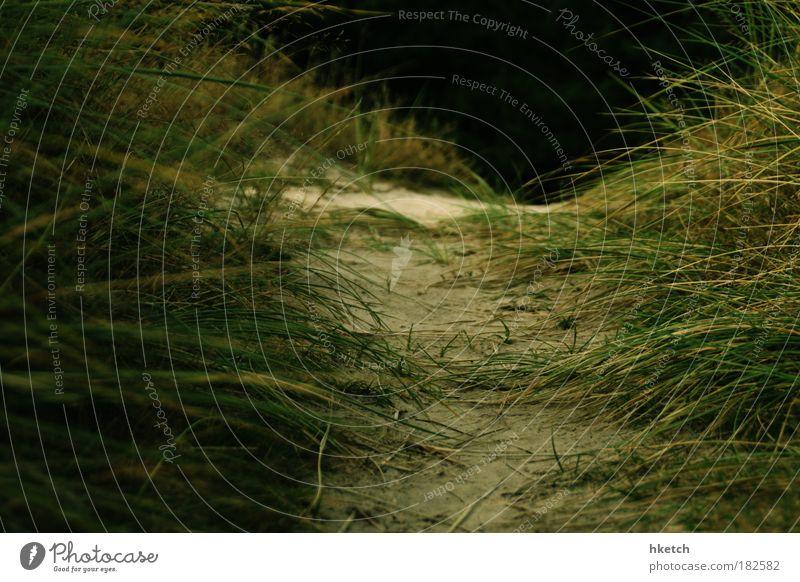 SPO|09 - Ins Unbekannte Natur grün Pflanze Sommer Strand Wiese Gras Glück Sand Zufriedenheit Küste Hoffnung Neugier Erwartung Ausdauer