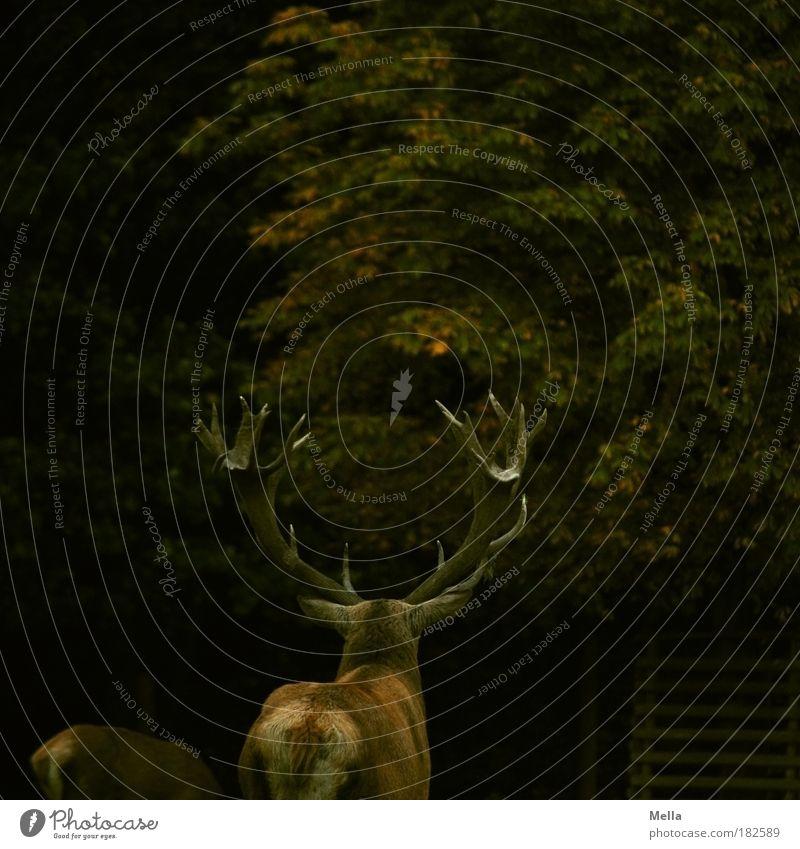 Kitsch by nature Natur Baum ruhig Tier Wald dunkel Herbst Stimmung braun Zusammensein Kraft Umwelt Macht stehen Kitsch Schutz