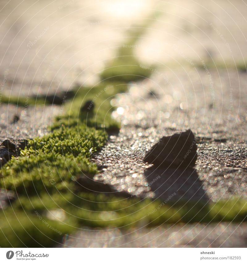 Abendlicht grün Pflanze Stein Park Beton Wachstum Moos Unkrautbekämpfung