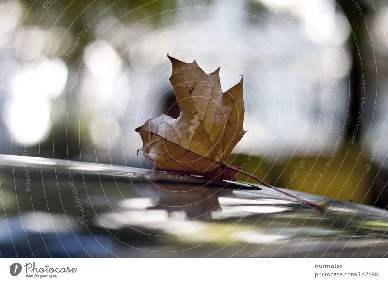 Einzelgänger Natur Pflanze Blatt Einsamkeit Haus Straße Herbst Umwelt PKW Regen Kunst Wind Nebel ästhetisch Dach Ende