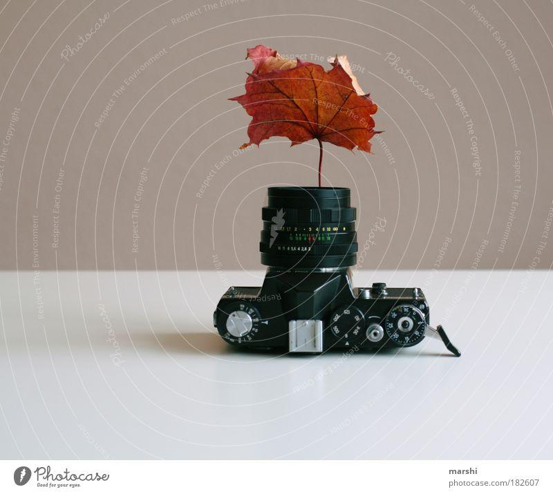 herbstliche Fotos sind grad der Renner Natur Blatt Herbst braun Fotografie Wachstum Kitsch Fotokamera außergewöhnlich analog Fotografieren Vase Herbstlaub
