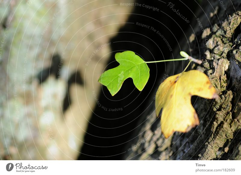 Nachwuchs Natur Baum Blatt Herbst Park Zukunft Wandel & Veränderung Baumstamm Baumrinde Zwilling