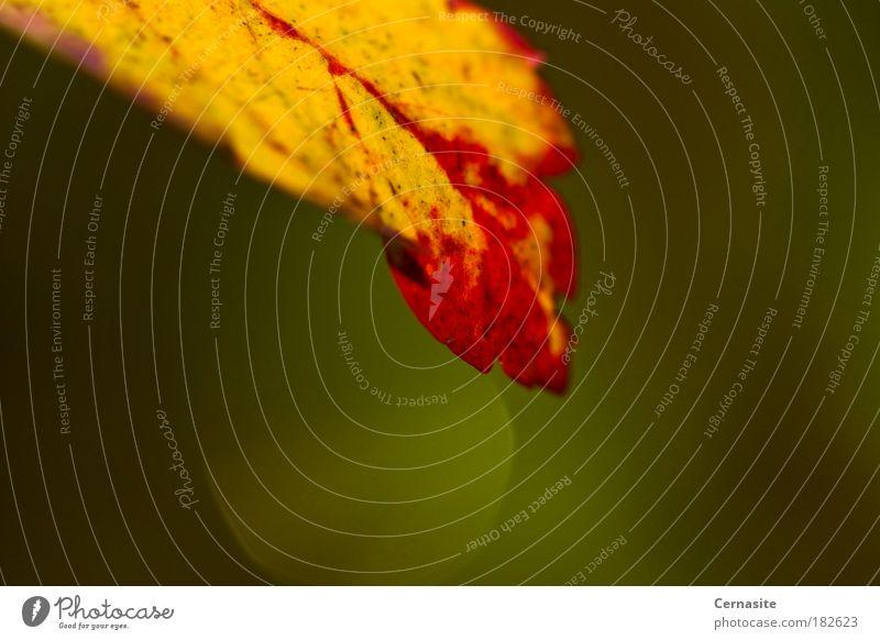 Tiefe Farbfoto mehrfarbig Außenaufnahme Nahaufnahme Makroaufnahme Menschenleer Tag Blitzlichtaufnahme Licht Schatten Kontrast Lichterscheinung Unschärfe