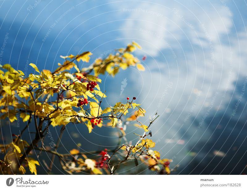 Still ruht der See... Natur Wasser Himmel blau Pflanze ruhig gelb Erholung Herbst Landschaft Design gold frisch Sträucher Wandel & Veränderung