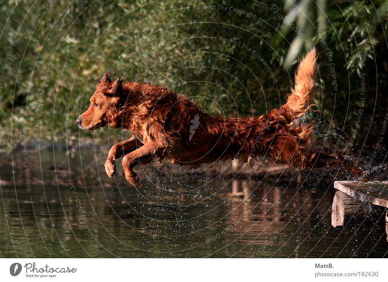 Jump! Farbfoto Außenaufnahme Menschenleer Reflexion & Spiegelung Sonnenlicht Bewegungsunschärfe Tierporträt Blick nach vorn Haustier Hund 1 Wasser Freude