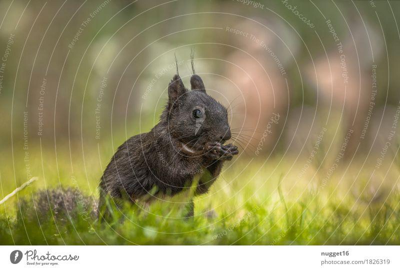 black beauty Natur grün weiß Tier Wald schwarz Umwelt gelb Wiese Gras Garten braun orange Park Wildtier ästhetisch