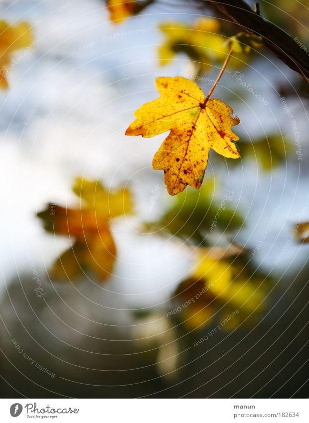 Es weht der Wind ein Blatt vom Baum... Farbfoto Gedeckte Farben Außenaufnahme abstrakt Strukturen & Formen Textfreiraum oben Textfreiraum unten Tag Licht