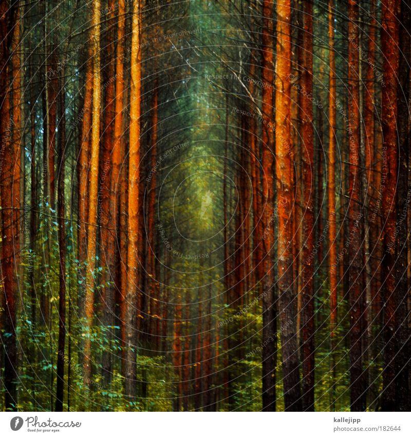 wald-weit-wech Farbfoto mehrfarbig Experiment Menschenleer Tag Licht Schatten Kontrast Bewegungsunschärfe Umwelt Natur Landschaft Pflanze Klima Klimawandel Baum