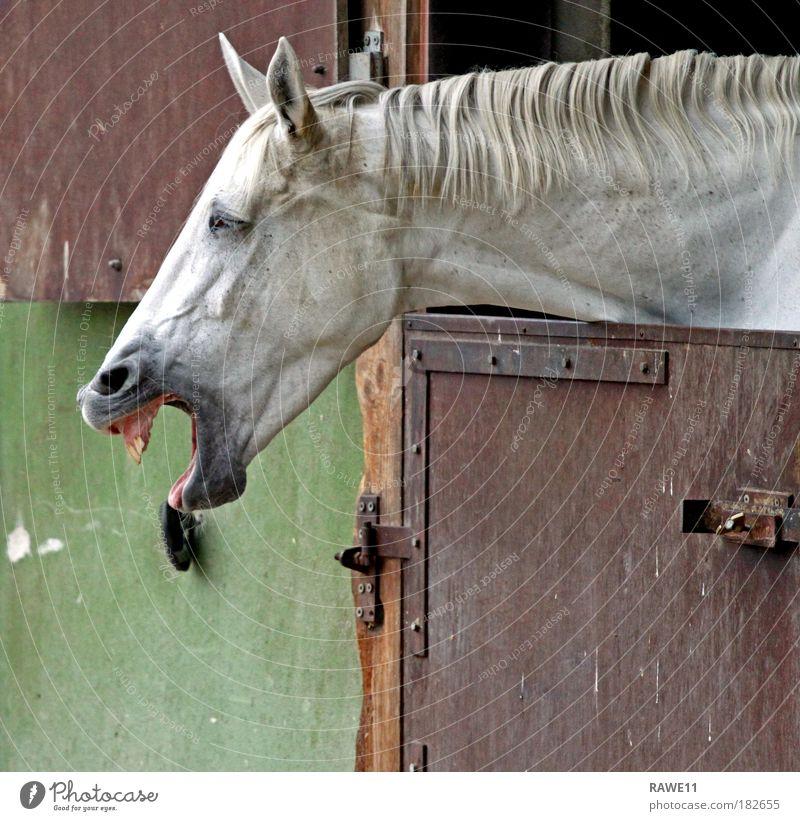 Ein lachendes Pferd Freude Tier Kraft Pferd Fröhlichkeit Tiergesicht Haustier Tierliebe