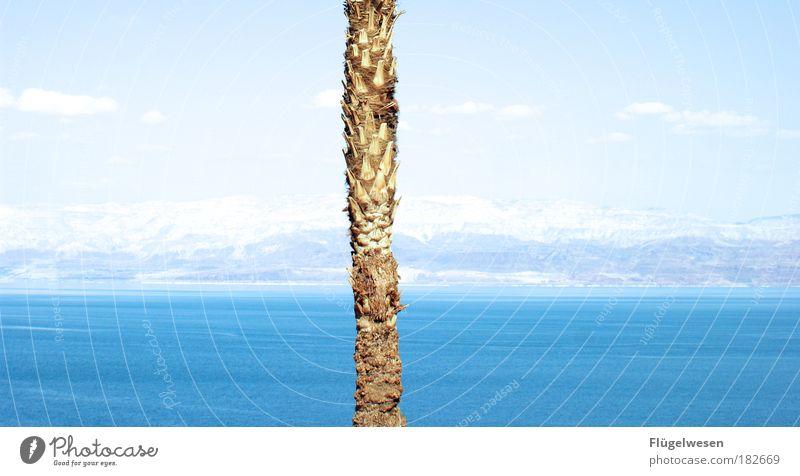 Wir sind allein allein allein allein Wasser Himmel Baum Meer Ferien & Urlaub & Reisen Einsamkeit Ferne Berge u. Gebirge Freiheit Kraft warten Ausflug Macht