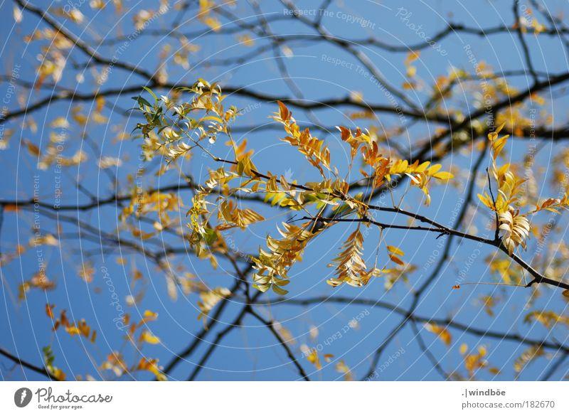 Die letzten Sonnenstrahlen genießen Himmel Natur alt grün schön rot Blatt schwarz Umwelt gelb Wärme Herbst außergewöhnlich braun Park träumen