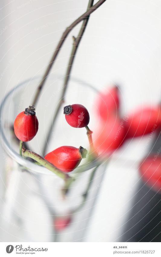 Dancing Rosehips Design exotisch Leben harmonisch Dekoration & Verzierung Umwelt Natur Herbst Pflanze Hagebutten Beeren Zweige u. Äste Blumenstrauß Glas trendy