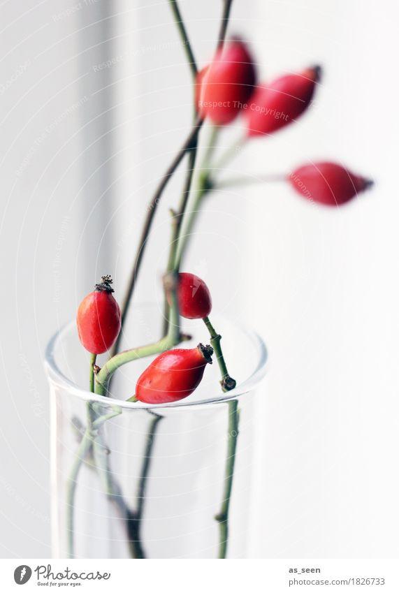 Red Rosehips Natur Pflanze Weihnachten & Advent grün weiß rot Winter Umwelt Leben Herbst Lifestyle Stil Design Häusliches Leben glänzend Dekoration & Verzierung