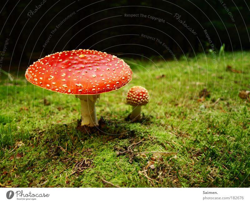 Märchenwald Natur grün schön rot Pflanze Farbe Erholung Herbst Gras Glück Zufriedenheit Wachstum gefährlich stehen bedrohlich rund