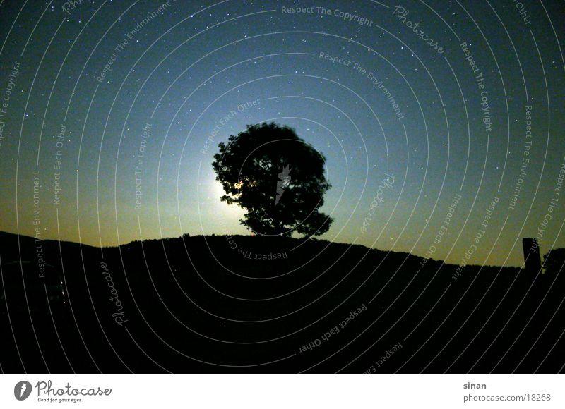 When The Moon Is Shining Bright... Baum Licht Nacht Langzeitbelichtung Mond Schatten Landschaft