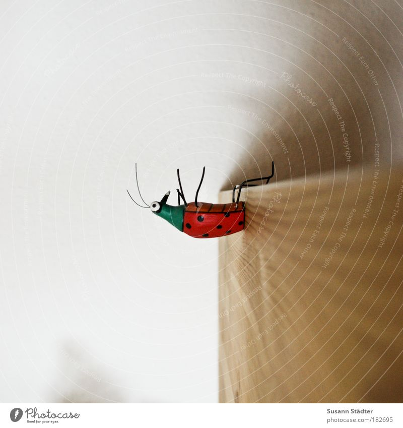 BUG Tapete Möbel Zoo Holz Mauer Insekt Detailaufnahme mehrfarbig sitzen Tisch Mensch Tier Punkt Muskulatur Draht Käfer