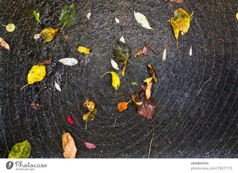 Blätter Farbe Blatt kalt Herbst Regen Textfreiraum glänzend nass Regenwasser Asphalt Herbstlaub Herbstwetter ungemütlich