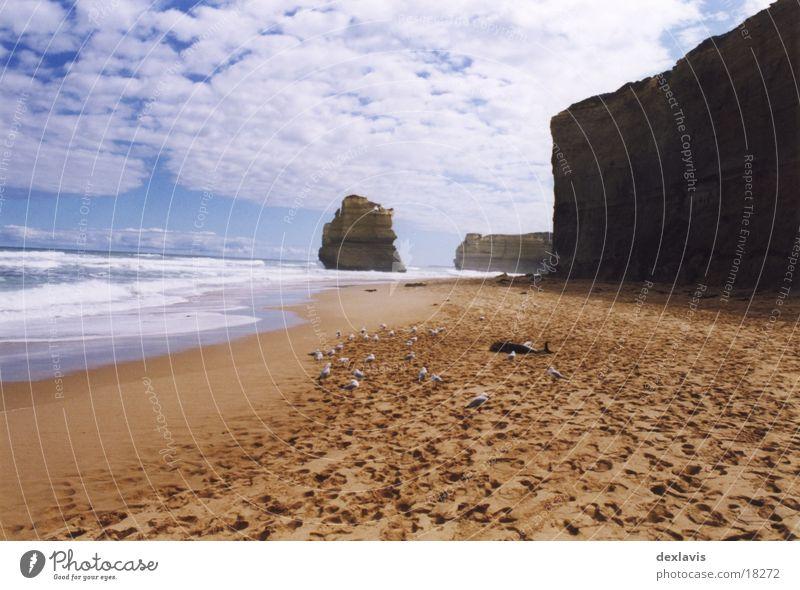 strandgut Delphine Meer Möwe Strand Klippe Sand Tod