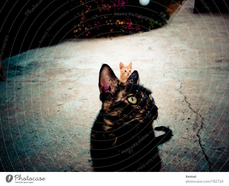 We are family Katze alt rot Tier schwarz Tierjunges sitzen beobachten Neugier Fell Asphalt entdecken Interesse Haustier Schüchternheit hocken