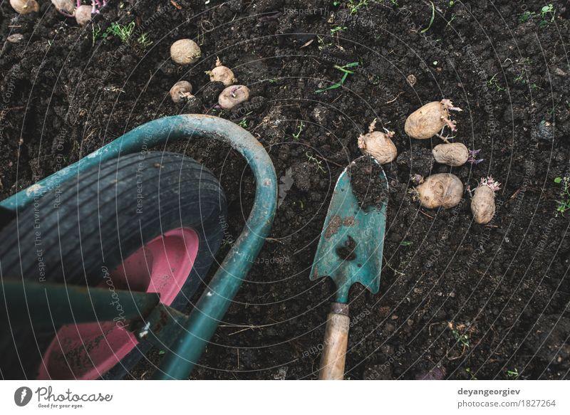 Kartoffeln im kleinen Biogarten pflanzen Natur Pflanze natürlich Garten Erde Wachstum frisch Boden Gemüse Bauernhof Ackerbau Gartenarbeit Wurzel roh organisch