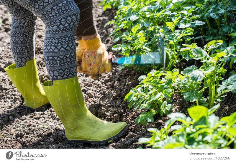 Kartoffeln hacken im Hausgarten Sommer Garten Arbeit & Erwerbstätigkeit Gartenarbeit Werkzeug Mensch Mann Erwachsene Hand Pflanze Erde grün Landwirt Hacke