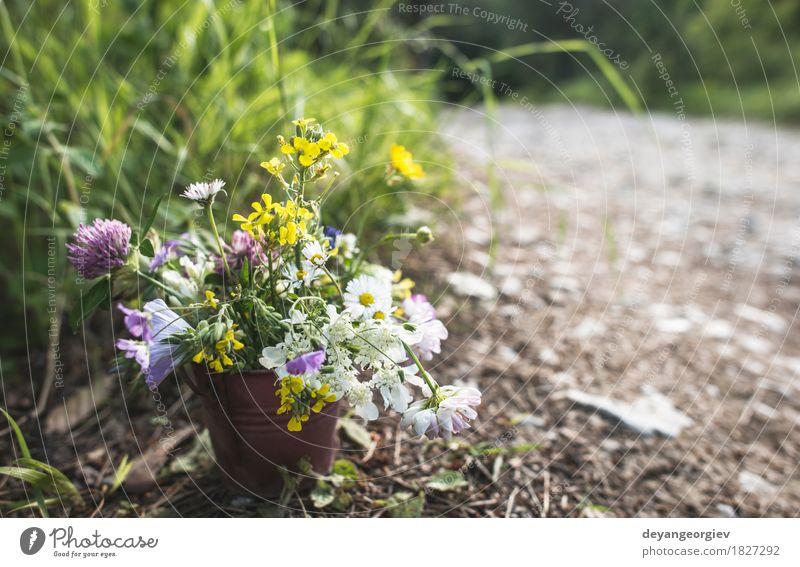 Eimer mit Wildblumen im Wald schön Sommer Frau Erwachsene Natur Blume Blüte Wiese Blumenstrauß hell wild grün Halt Beautyfotografie Hintergrund Wiesenblume Feld