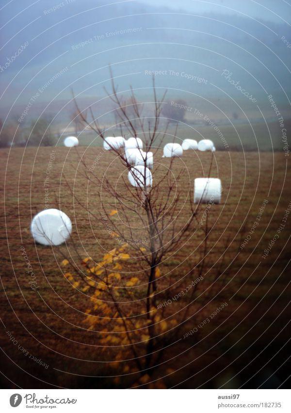 Marshmallowmeeting Herbst Wiese Landwirtschaft Traktor Stroh Strohballen