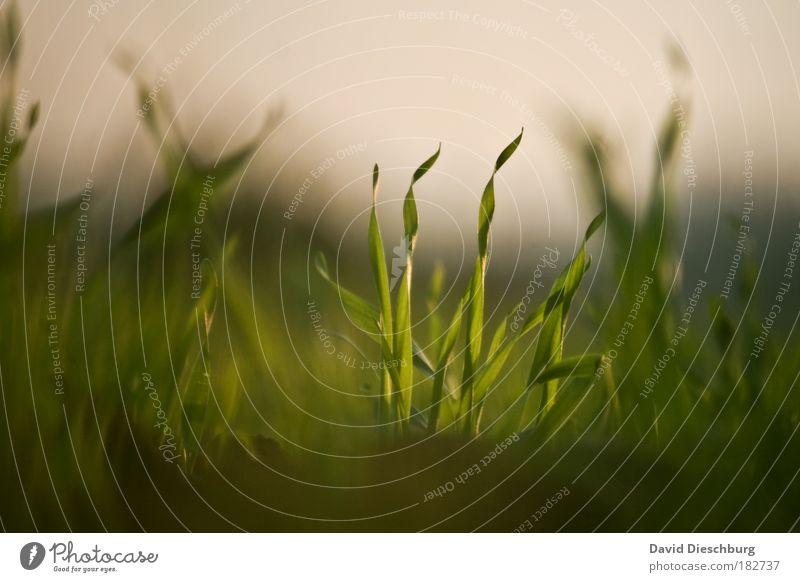 Synchrone Zweisamkeit Natur grün Sommer Pflanze Landschaft Umwelt Wiese Gras Frühling Wachstum paarweise Boden Halm Grünpflanze gleich Grasnarbe