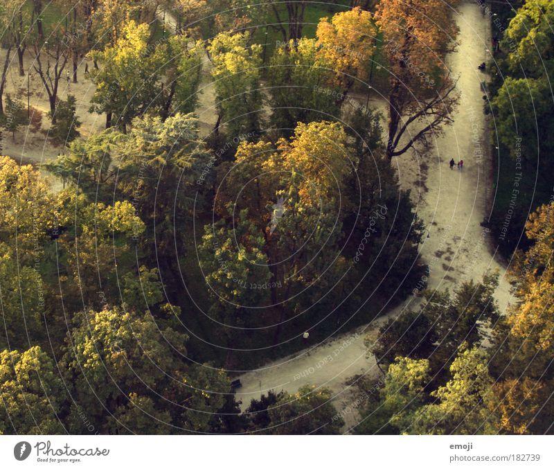 Herbst Farbfoto Außenaufnahme Luftaufnahme Abend Vogelperspektive Natur Erde Baum Park Wald gelb grün Wege & Pfade Spaziergang Tag