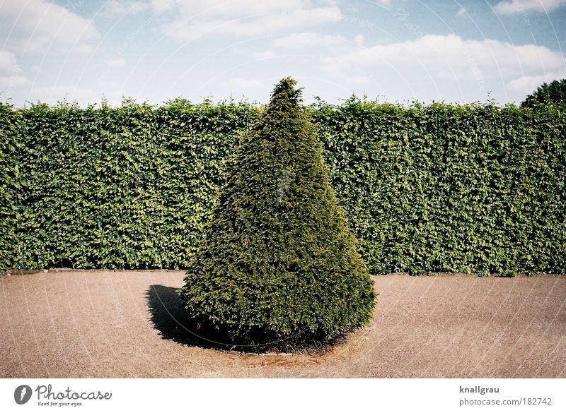 Kegeltanne Himmel Natur grün Baum Ferien & Urlaub & Reisen Wolken ruhig Erholung Garten Sand Park Zufriedenheit Spaziergang Idylle Tanne Geometrie