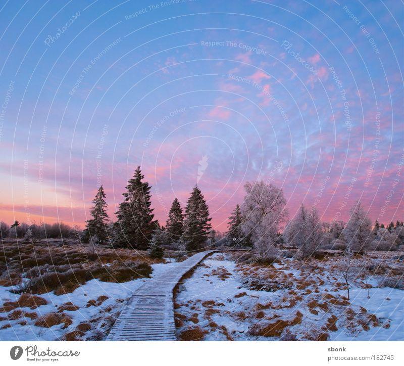 Märchenweg Himmel Baum Winter Wolken Einsamkeit kalt Schnee Gras Nacht Wege & Pfade Abend Landschaft Eis Sonnenuntergang rosa Umwelt