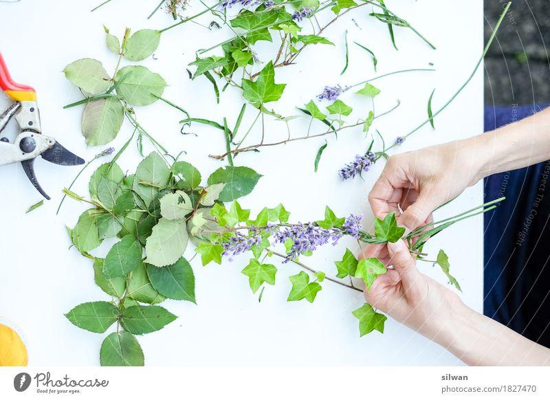 Blumenkranz im Frühstadium Mensch Frau Pflanze grün schön weiß Hand ruhig Erwachsene natürlich feminin Garten Arbeit & Erwerbstätigkeit Freizeit & Hobby frisch