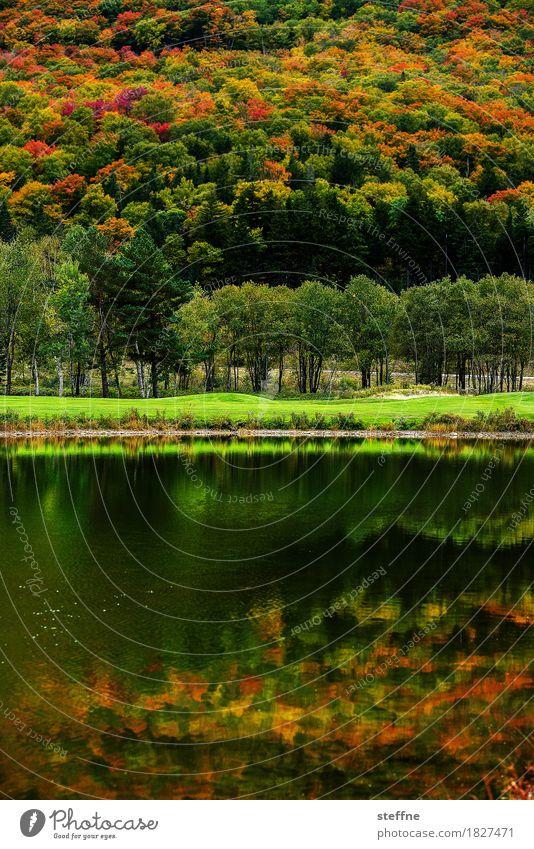Around the World: Bretton Woods around the world Ferien & Urlaub & Reisen Reisefotografie entdecken Tourismus New Hampshire bretton woods Herbst Wald Natur