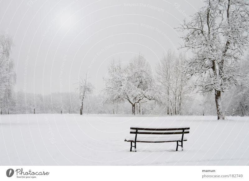 Winterzeit Sinnesorgane Erholung ruhig Natur Landschaft Eis Frost Schnee Baum Bank Park weiß Traurigkeit Einsamkeit kalt trist Nebel Außenaufnahme