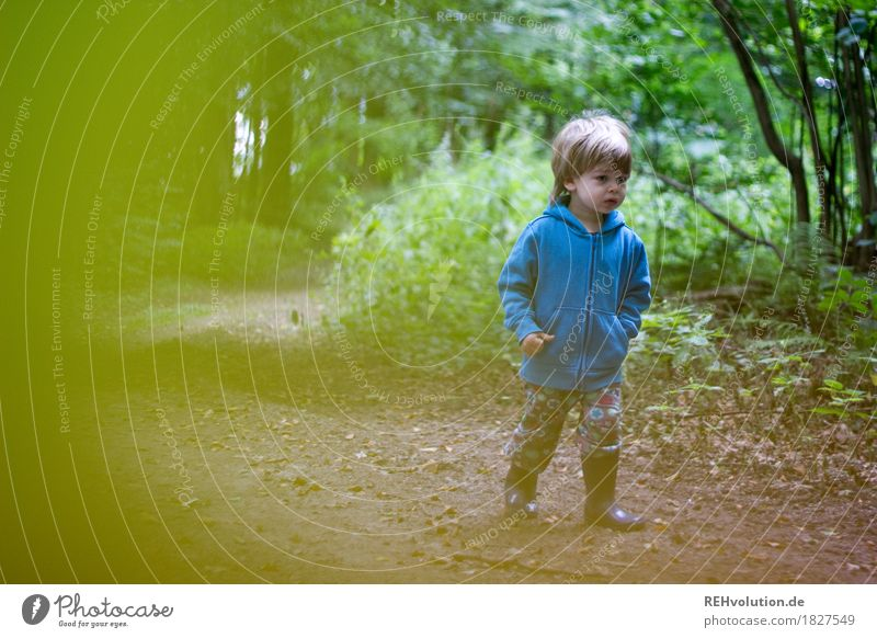 Unterwegs im Wald Ausflug Mensch maskulin Kind Kleinkind Junge 1 1-3 Jahre Umwelt Natur Landschaft Baum Sträucher Wege & Pfade Pullover Gummistiefel gehen