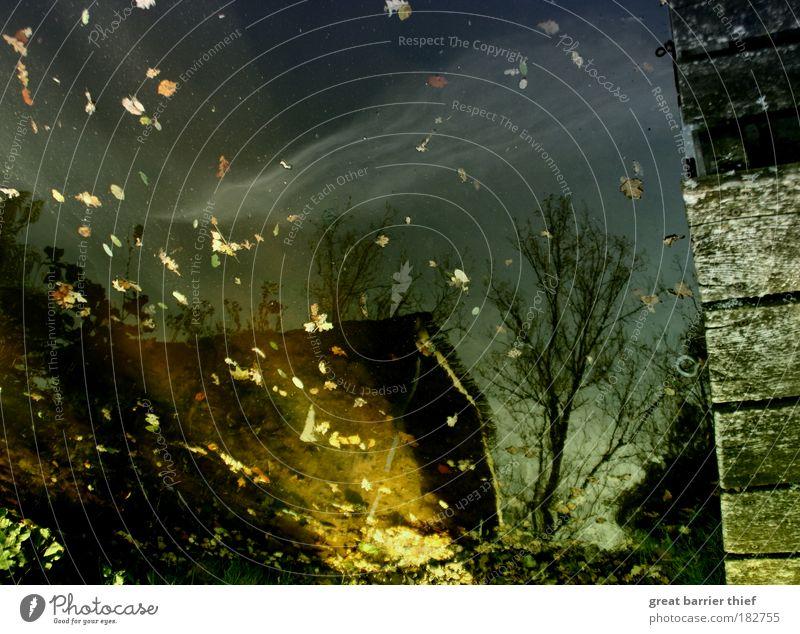 Night is the new day com Wasser Baum Blatt Haus Herbst See gold entdecken Steg Teich