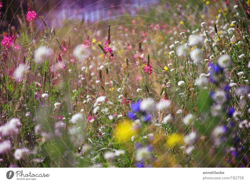 mitten in Berlin Farbfoto Außenaufnahme Nahaufnahme Menschenleer Tag Ausflug Sommerurlaub Umwelt Natur Landschaft Pflanze Blume Gras Blatt Blüte Wildpflanze