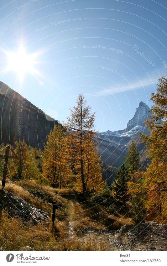 Herbstsession am Matterhorn Natur Baum Ferien & Urlaub & Reisen Herbst Berge u. Gebirge Holz träumen Stein Ausflug Tourismus Idylle Schweiz genießen Wohlgefühl Matterhorn