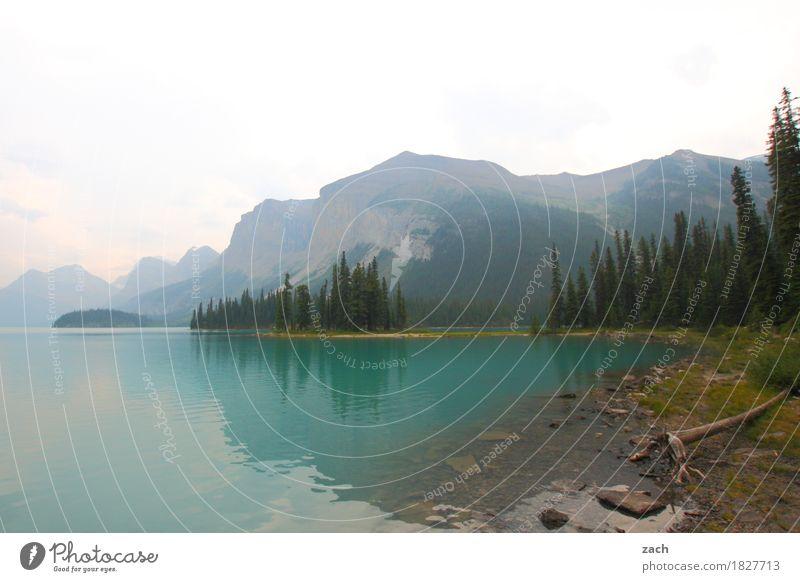 durchatmen Ferien & Urlaub & Reisen Tourismus Landschaft Pflanze Wasser Himmel Wolken Sommer Herbst Nebel Baum Moos Wald Berge u. Gebirge Rocky Mountains Gipfel