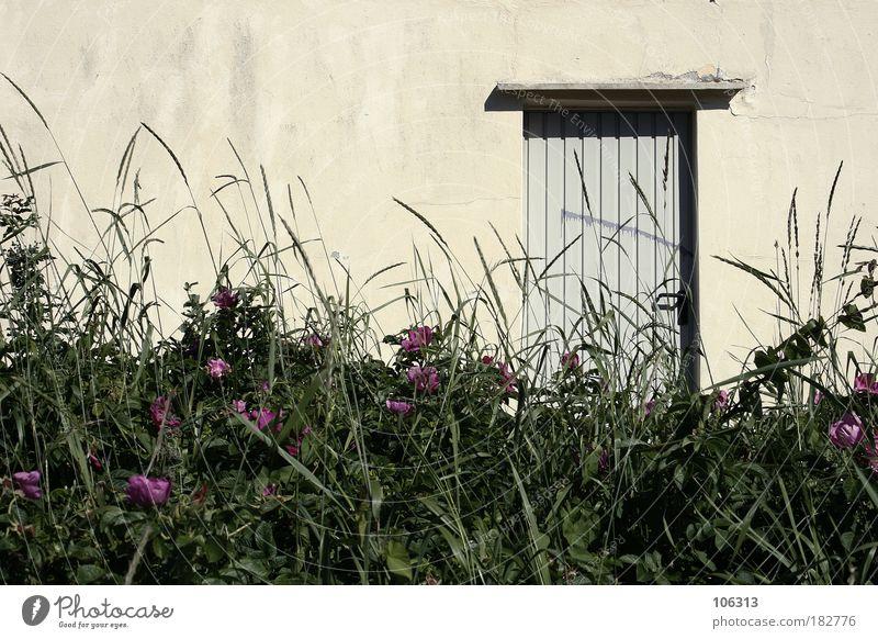 Fotonummer 123553 Natur alt Pflanze Sommer Blume ruhig Einsamkeit Haus Wiese Wand Gras Tür Wohnung Sträucher Idylle Umzug (Wohnungswechsel)
