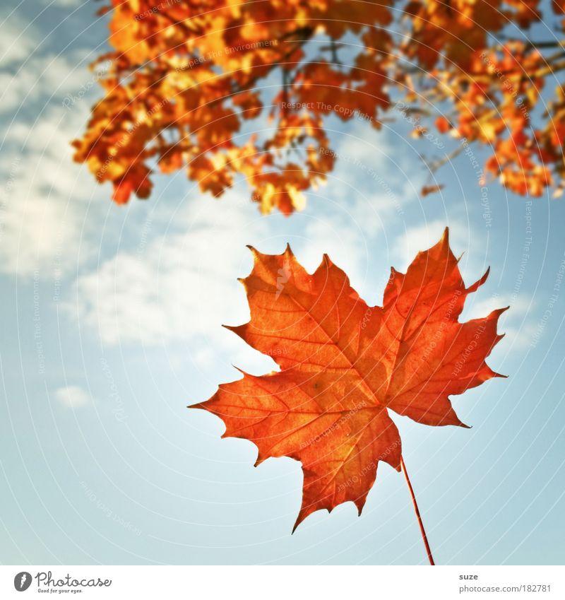 Titelblatt Natur schön alt Himmel Pflanze Blatt Wolken Herbst orange Wetter Zeit ästhetisch fallen Jahreszeiten Detailaufnahme Schönes Wetter