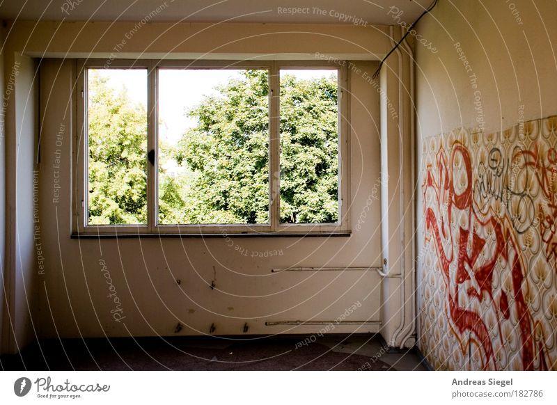 Blick ins Grüne Baum Haus Fenster Wand Graffiti Architektur Gebäude Mauer hell Raum Wohnung Innenarchitektur leer kaputt authentisch außergewöhnlich