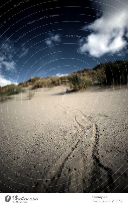 deine spuren im sand Natur Wasser Sonne blau Sommer Wolken Einsamkeit Tod Sand Landschaft Umwelt Sträucher Spuren Hügel Loch Düne