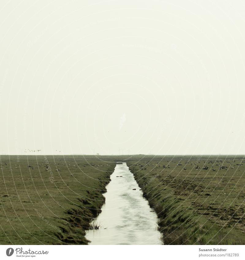 Entscheidungen treffen Landschaft schlechtes Wetter Wiese Feld Schlucht Wellen Küste Flussufer Bucht Nordsee Insel Hooge Halligen links rechts Kranich Vogel