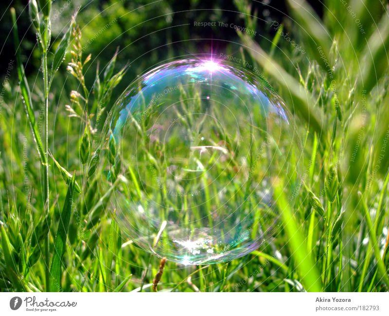 In freier Wildbahn Natur grün blau Sommer Freude Wiese Gras Freiheit Sonnenlicht Reflexion & Spiegelung glänzend rosa Umwelt fliegen frei