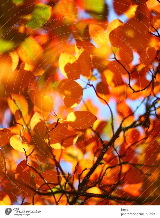 bunte welt Natur Farbe Blatt ruhig Umwelt Herbst natürlich Park frisch fantastisch Schönes Wetter Herbstlaub Herbstfärbung