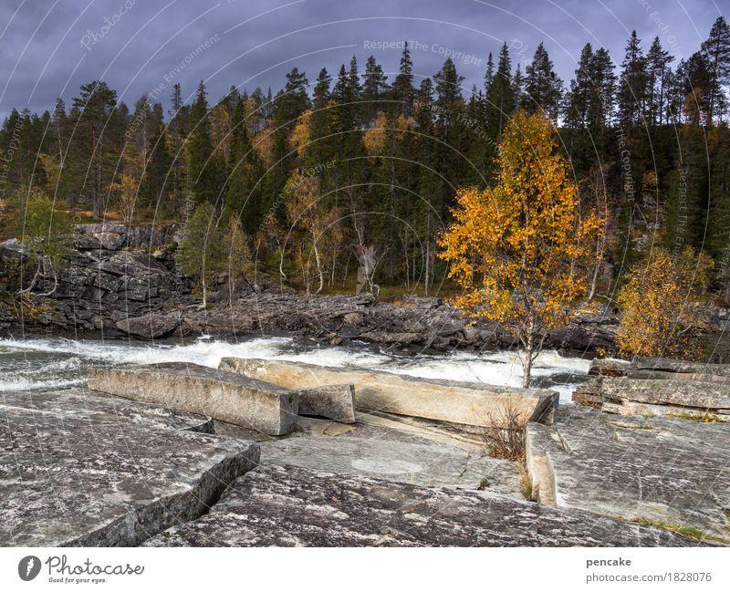 monoton | weißes rauschen Natur weiß Landschaft Wald Herbst Bewegung Felsen Fluss Wiederholung Wasserfall Norwegen Herbstfärbung Gewitterwolken Birke Granit Rauschen