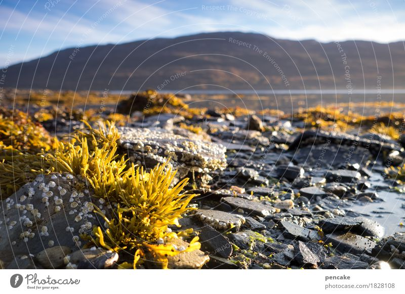 lebenselixier   wasser Natur Pflanze Wasser Landschaft Leben Küste Stein Schönes Wetter Urelemente Norwegen Fjord Algen ursprünglich Lebensraum Wasserpflanze